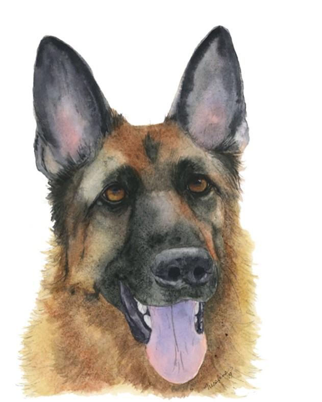Nicoline Mann Art Tori Dog Watercolor Pet Portrait