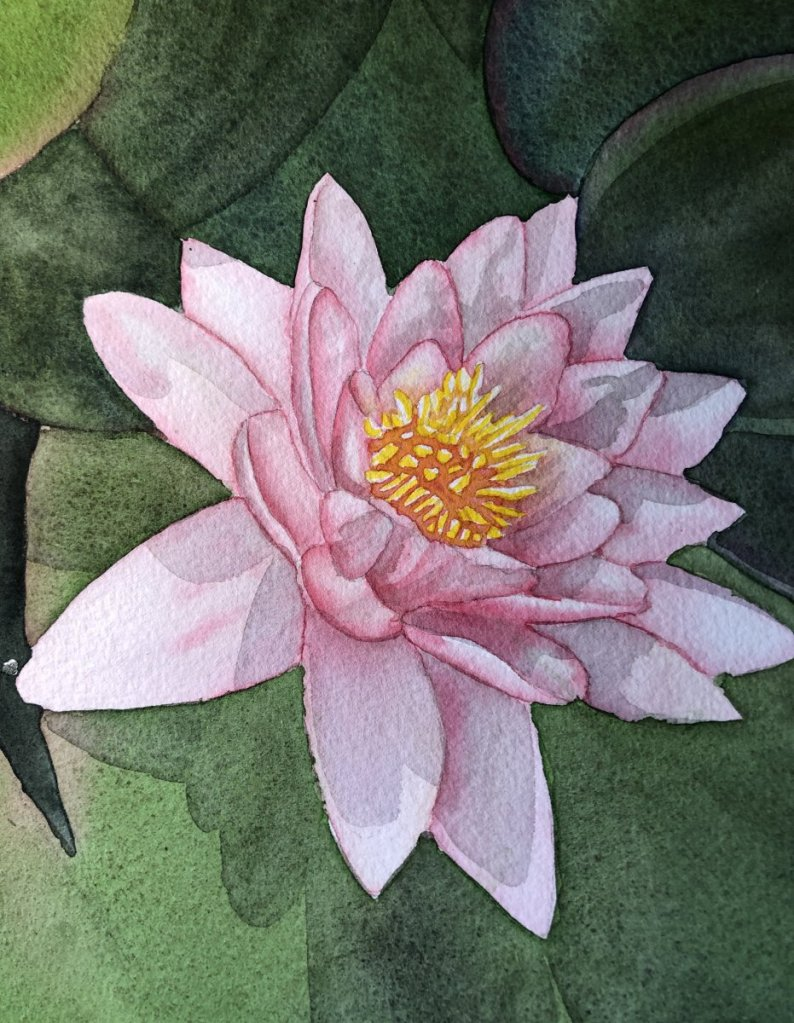 Sarah-Falk-waterlily