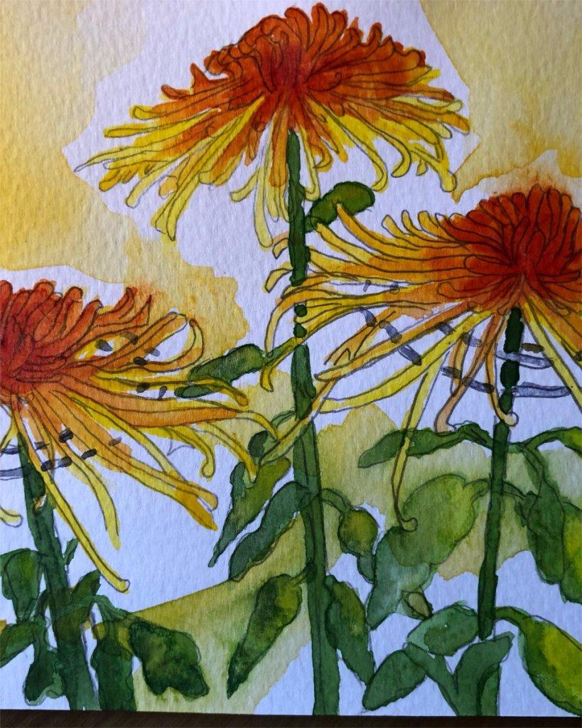 Mum's the word! Takayama Chrysanthemum