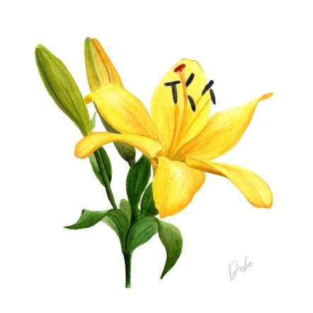 lily yellow watercolor painting by Disha Sharma