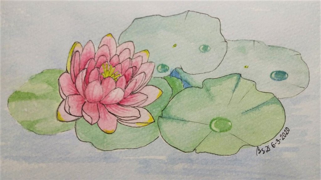 Lotus flower Ink and watercolor on paper #doodlewashJune2020 2nd prompt lotus june2 prompt