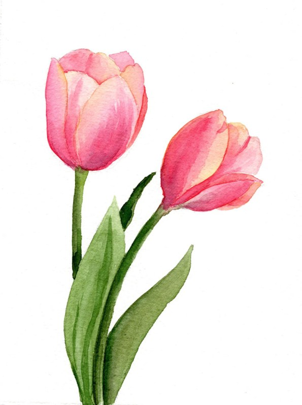 tulips watercolor painting by Disha Sharma