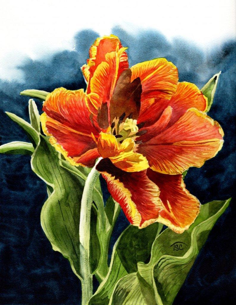 Parrot Tulip 34.