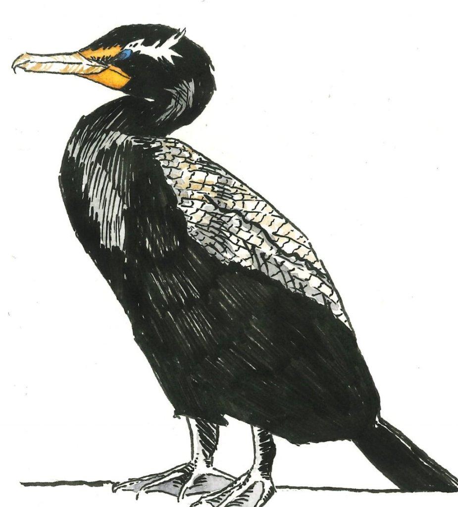 Cormorant AncientCormorant