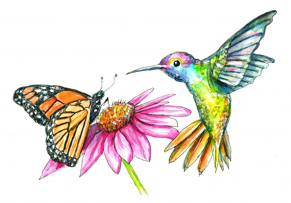 Hummingbird And Butterfly Flower Watercolor Illustration Painting