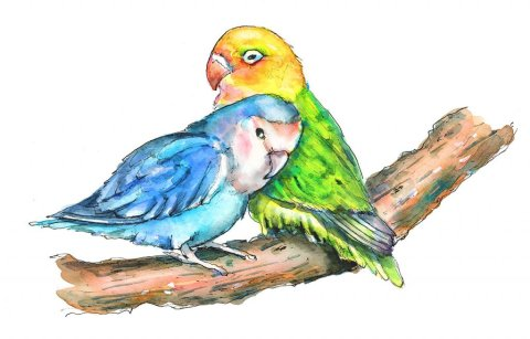 Two Love BIrds In Love Watercolor Illustration Painting
