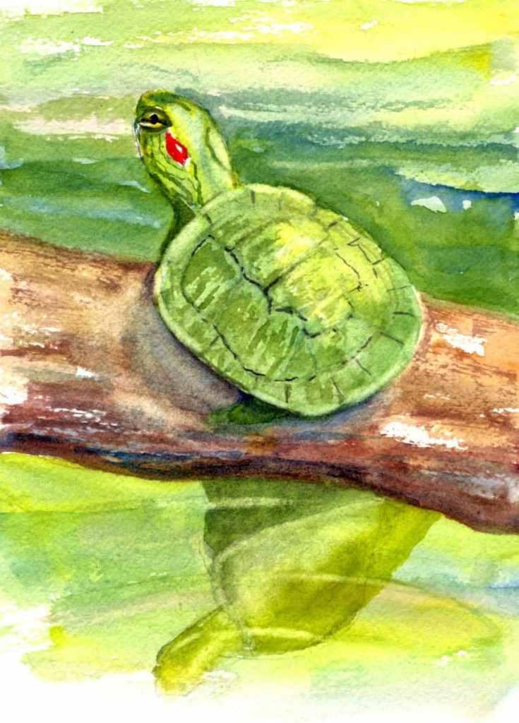 8/5/20 Turtle 8.5.20 Turtle img073