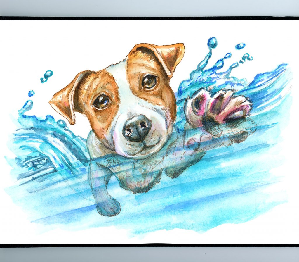 Jack Russell Terrier Swimming Dog Paddle Watercolor Painting Illustration Sketchbook Detail