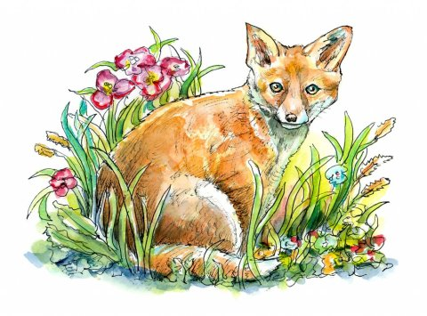Fox Red In Grass Flowers Watercolor Painting Illustration