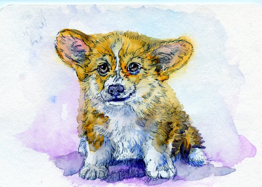 Did you know that, according to Welsh legend, fairies and elves have Pembroke Welsh Corgis to pull t