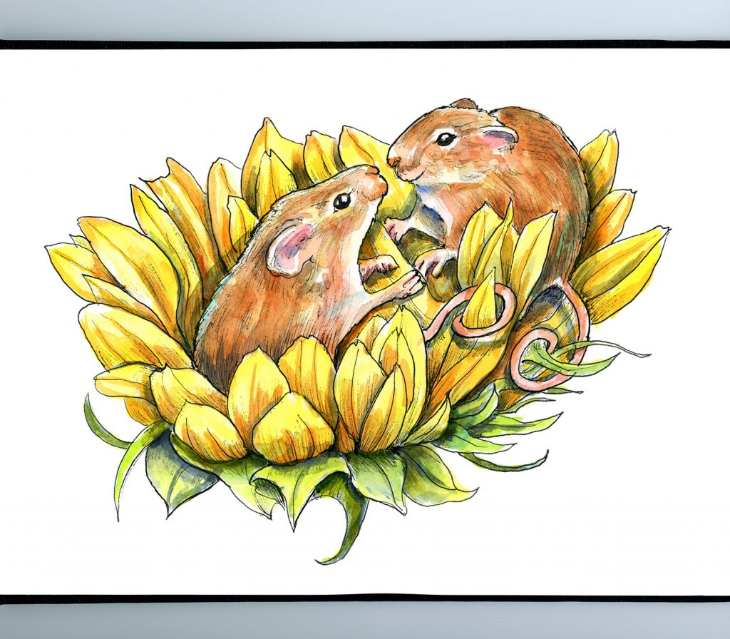 Harvest Mice On Sunflower Watercolor Painting Illustration Sketchbook Detail