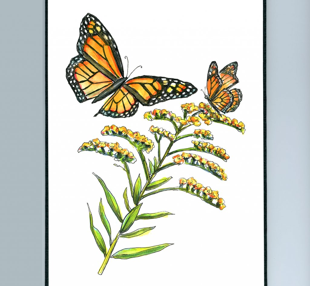 Goldenrod Monarch Butterflies Watercolor Painting Illustration Sketchbook Detail