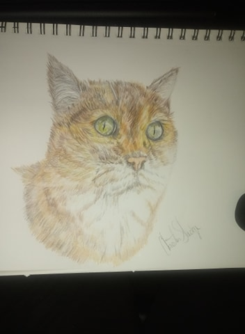 Its been a while cat