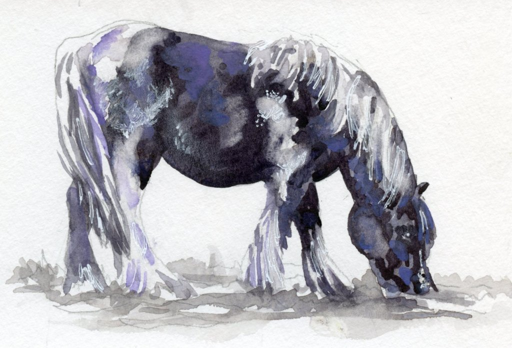 Did you know that despite the more well-known Clydesdale and Percheron, the number of Belgian Draft
