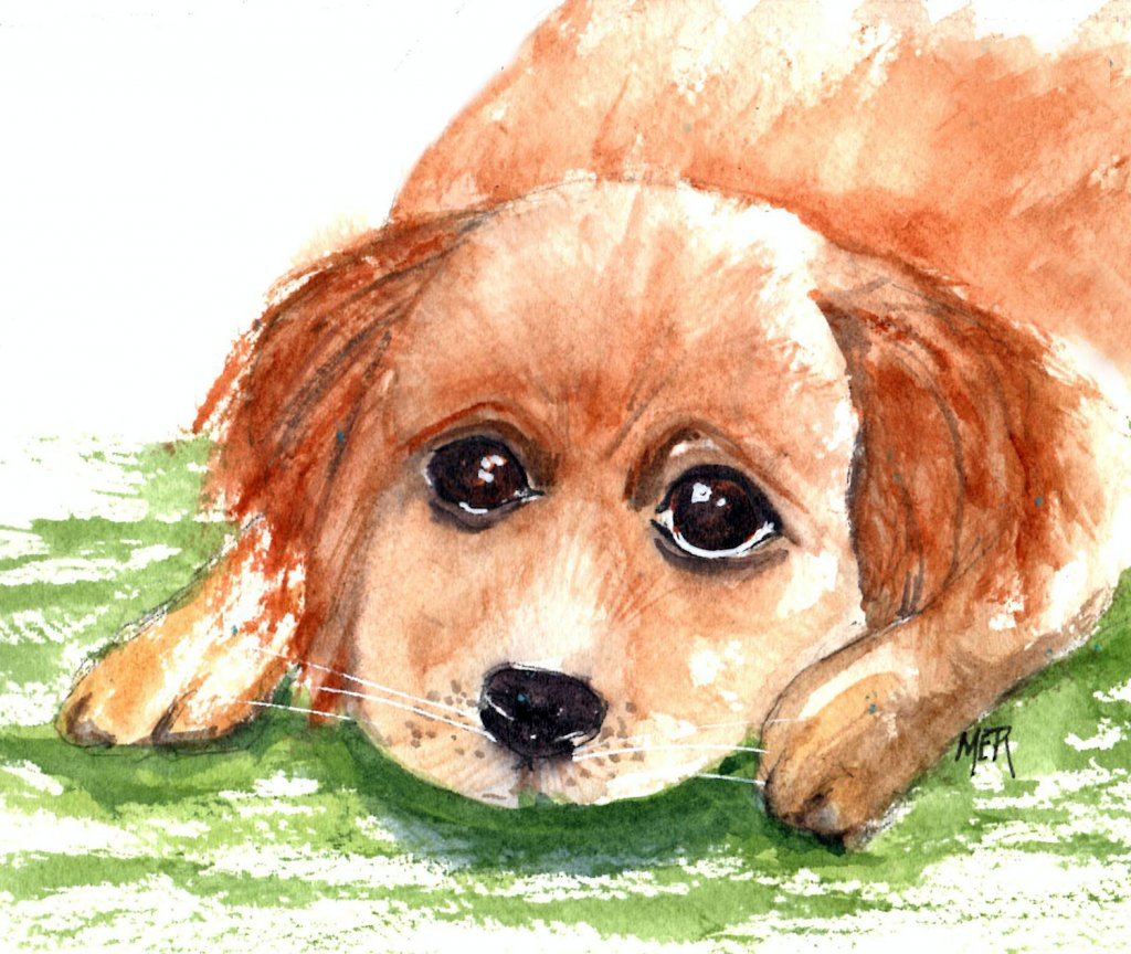 11/23/20 Puppy I used a Pixabay photo by Birgl to paint this little guy who looks just like a puppy