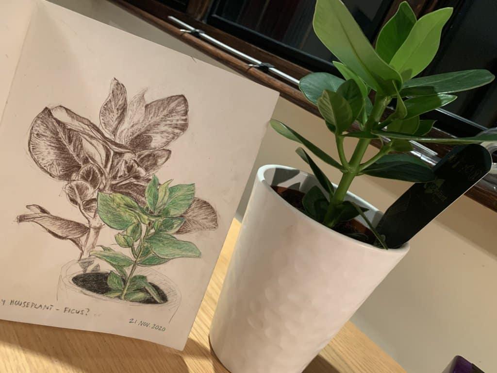Plants 🌱 839AEFA6-07DB-4EE3-8ADC-6EF47D2D3D1D