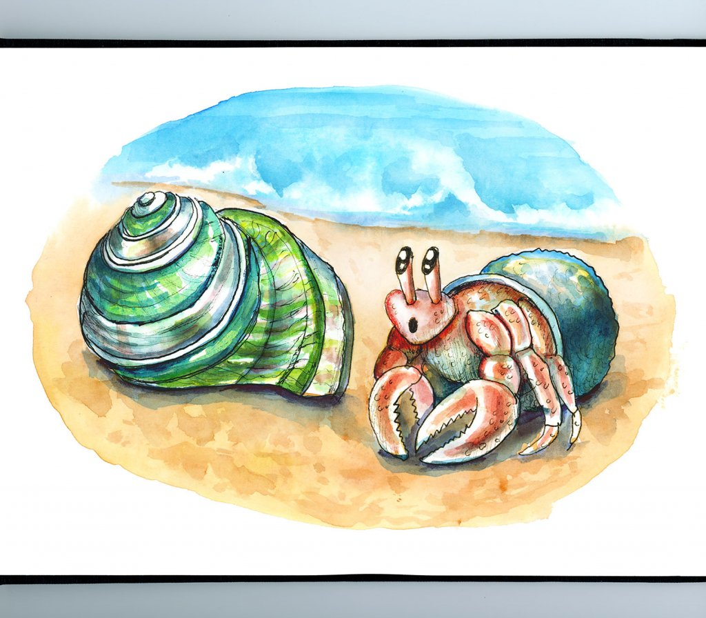 Hermit Crab Finding New Green Turban Shell On Beach Watercolor Illustration Painting Sketchbook Detail