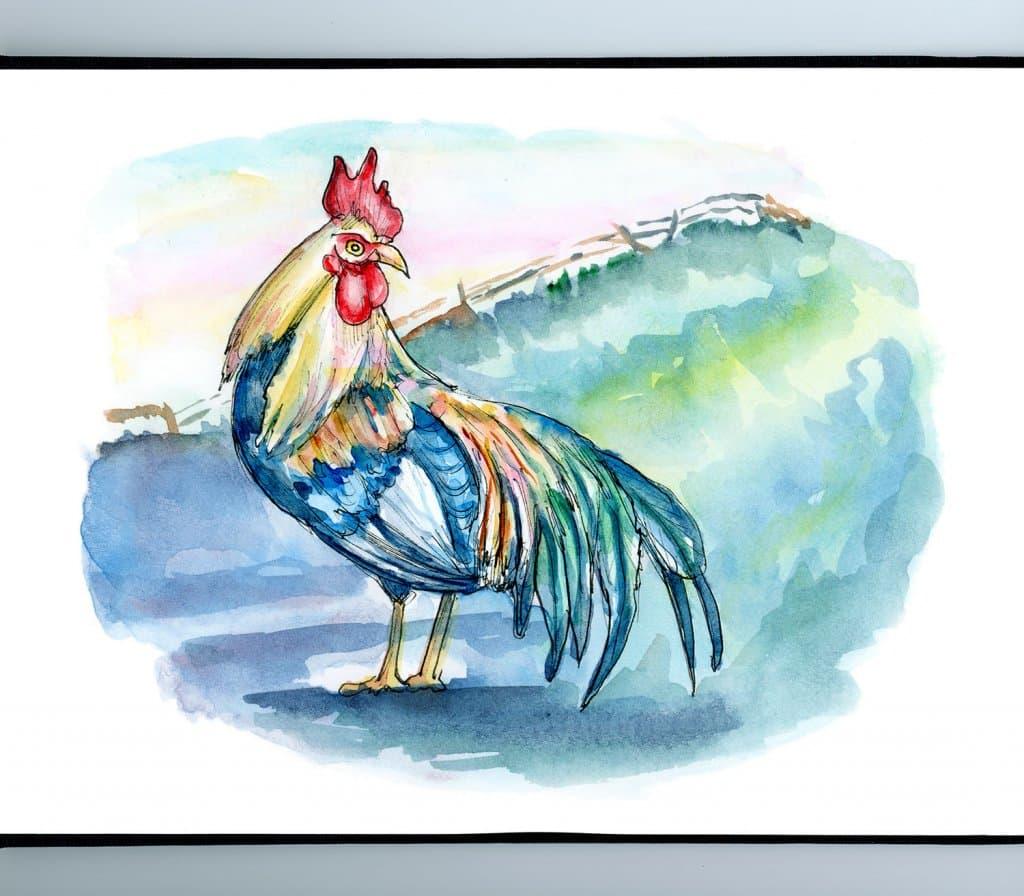 Rooster Sunrise Farm Rural Watercolor Illustration Painting Sketchbook Detail