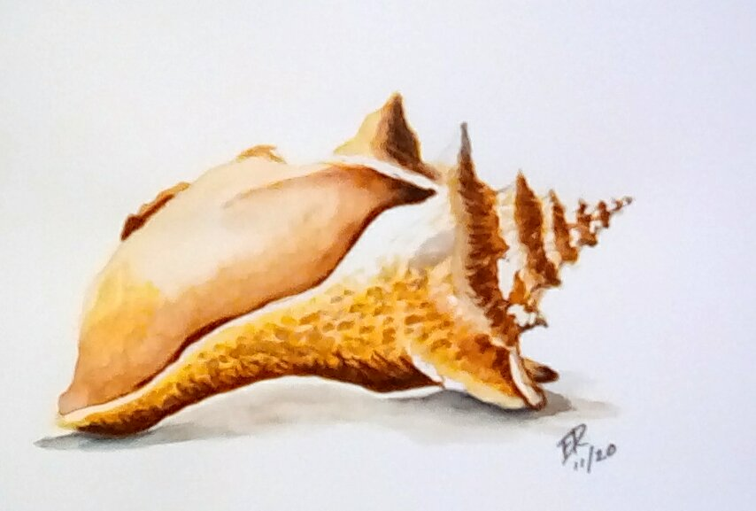 """Today\'s watercolor challenge \""""seashell\"""" . I would love to find a seashell like"""
