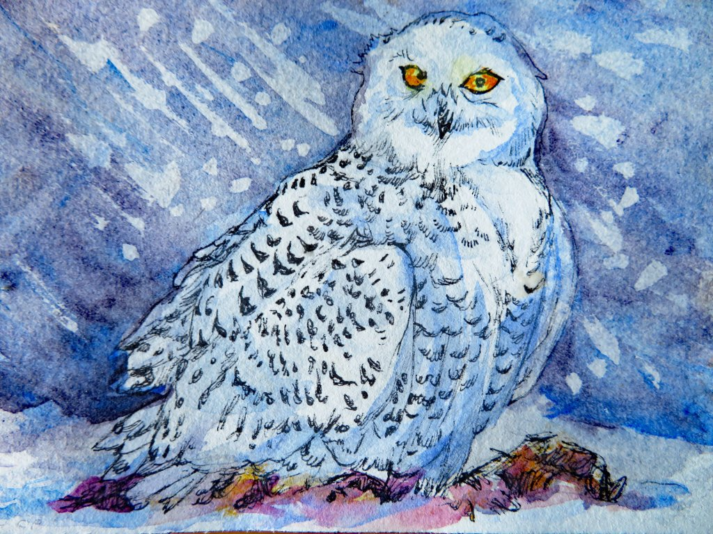 Did you know that the male snowy owl is mostly or entirely white, while the female has black bars? #