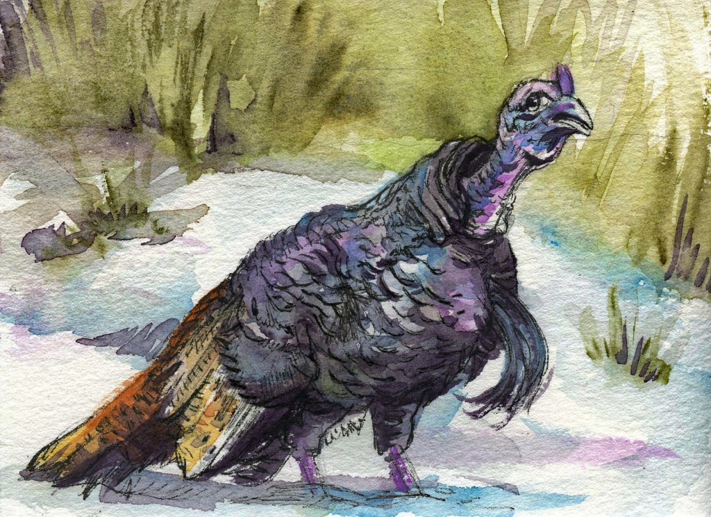 Did you know that turkeys have around 5,000 to 6,000 feathers? Happy Thanksgiving to all those who c