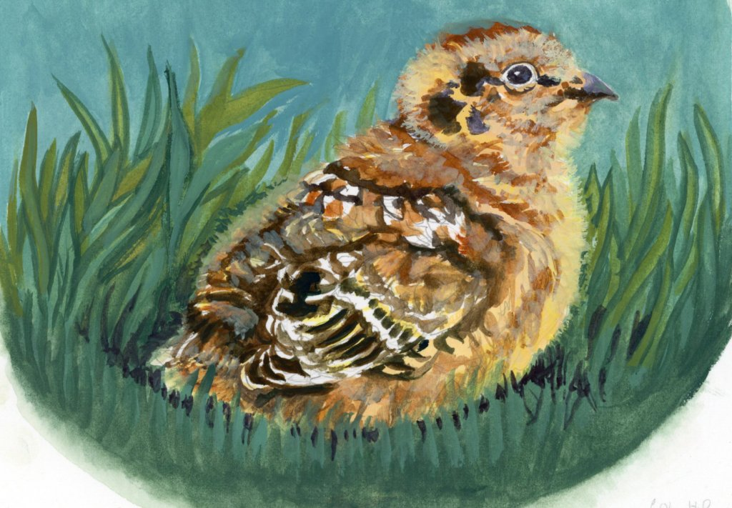 Did you know that Partridge chicks can feed themselves as soon as they hatch, and are able to fly as
