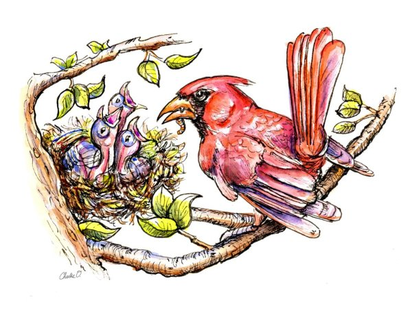 Baby Birds Cardinal Father Feeding Watercolor Illustration Signed Detail