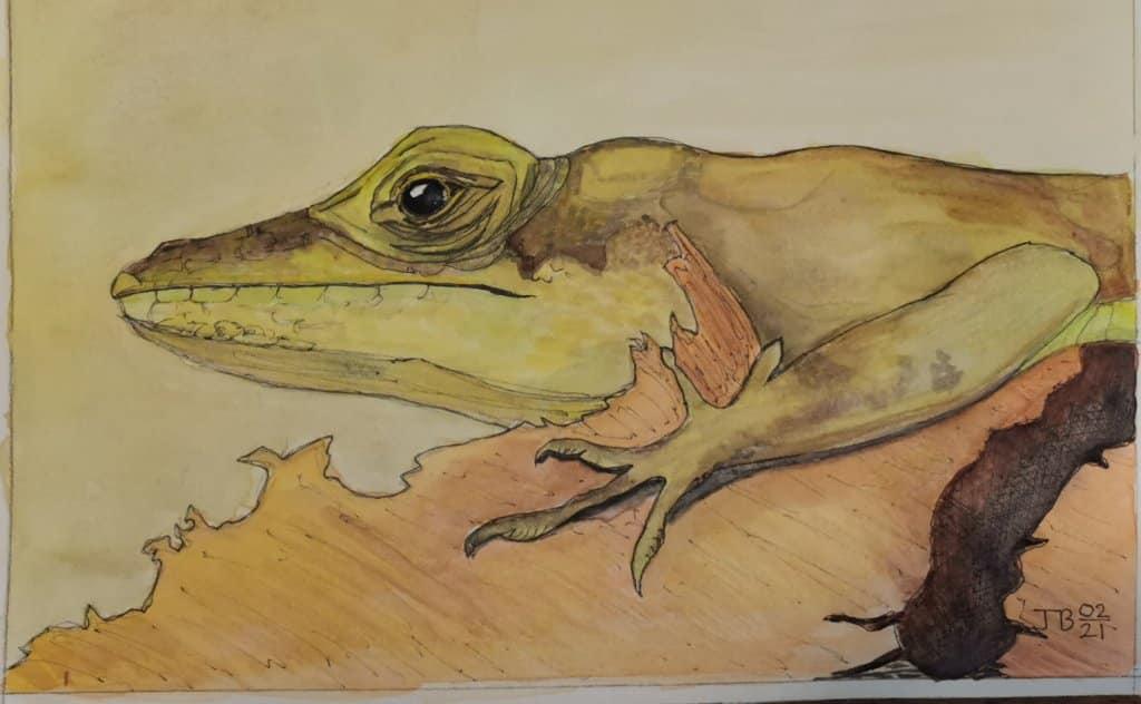 Bermuda Lizard commonly known as the Warwick Lizard IMG_20210222_190238