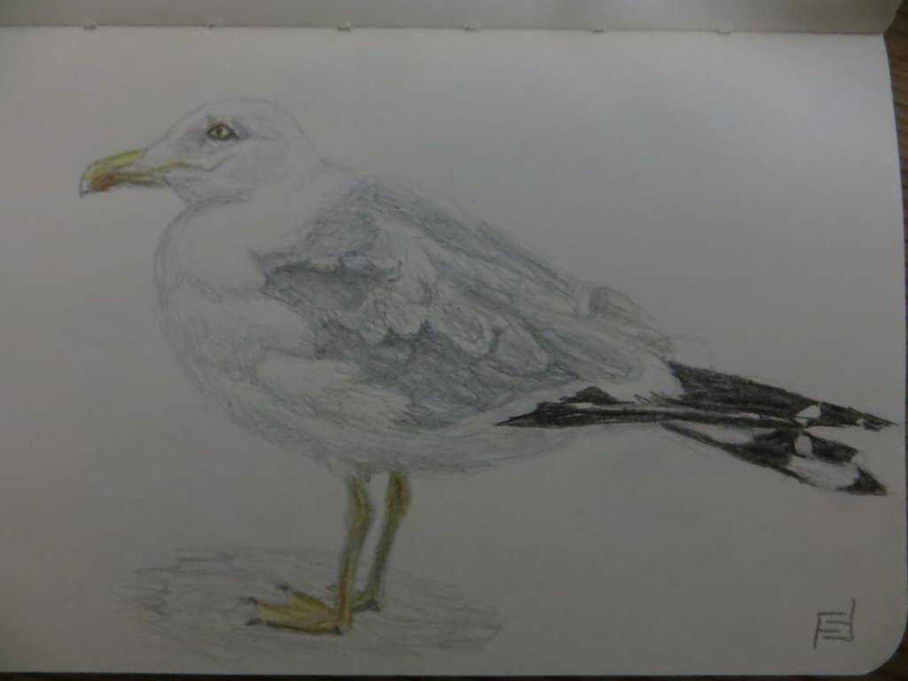 27.02.2021 – seabird IMG_4812
