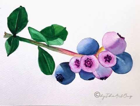 1 Blueberries Watercolor by Megha Cassandra The Art Bug