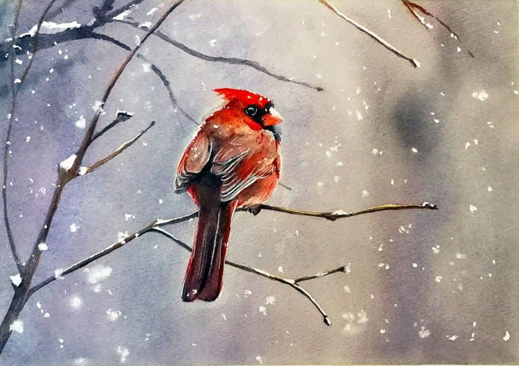 Cardinal Watercolour Painting by Eva Smith