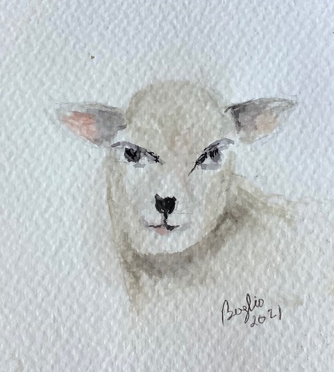 #doodlewashmarch2021day 4 lamb: What a sweet face for a leg of lamb or lamb chops. IMG_2927