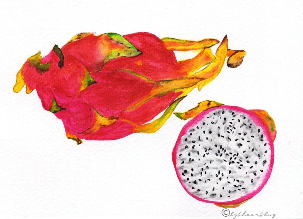 Passion Fruit Watercolor Painting bytheartbug (6)
