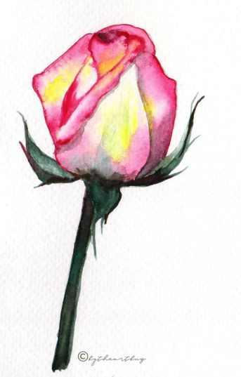 Pink Rose Watercolor