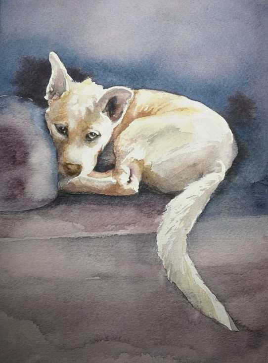 Tucker - White Dog Pet Portrait by Eva Smith