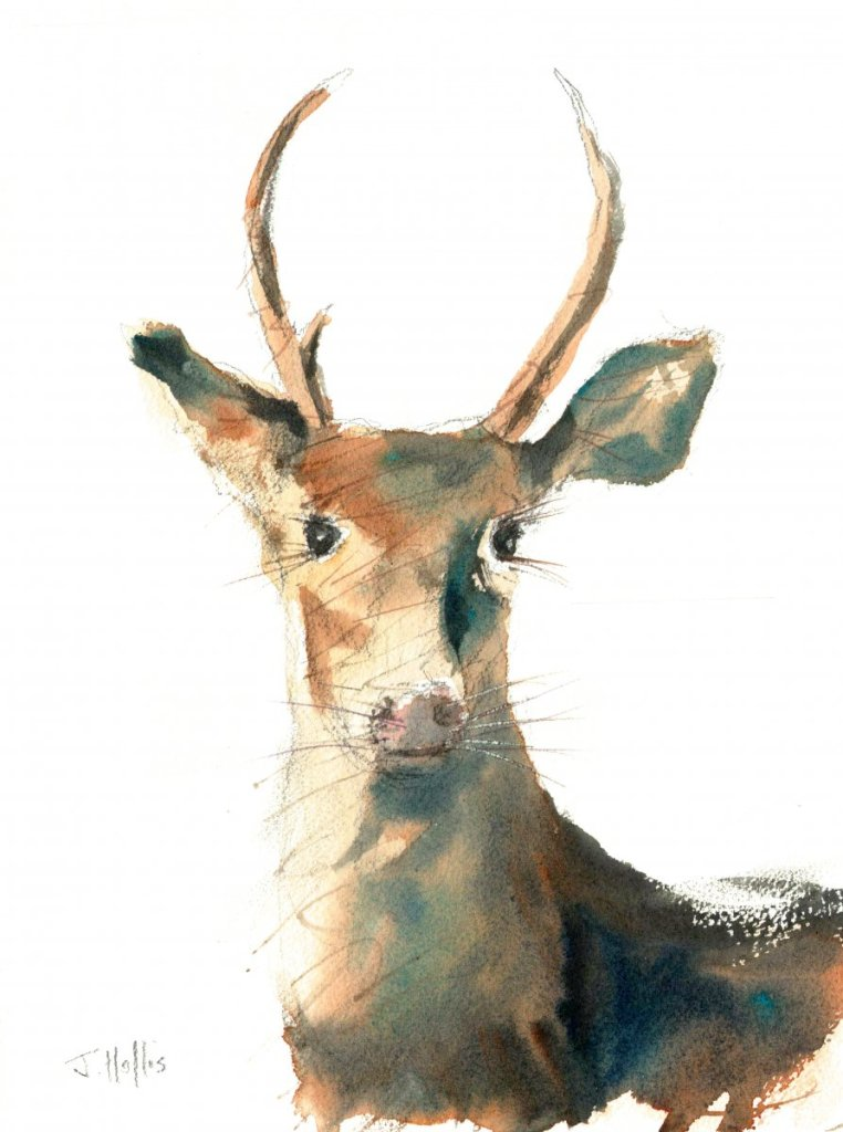 Deer Portrait Watercolour Deer Portrait hr