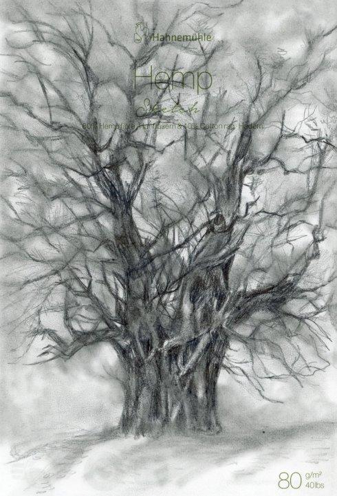 Old Tree-Zebra Tect 2Way Pencil o n Hahnemühle Hemp Sketch papers2
