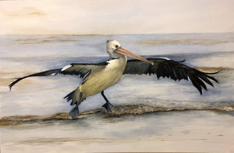 Sea Bird Watercolor Painting by Paul Blease
