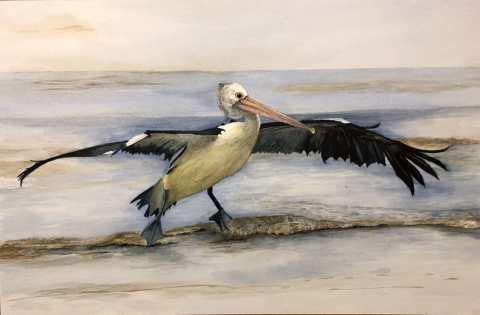 Sea Bird Watercolor Painting by Paul Blease