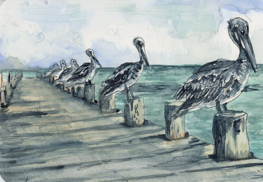 #DoodlewashMay2021 Prompt: Dock. Did you know that a pelican's jawbone bows outwards so they c