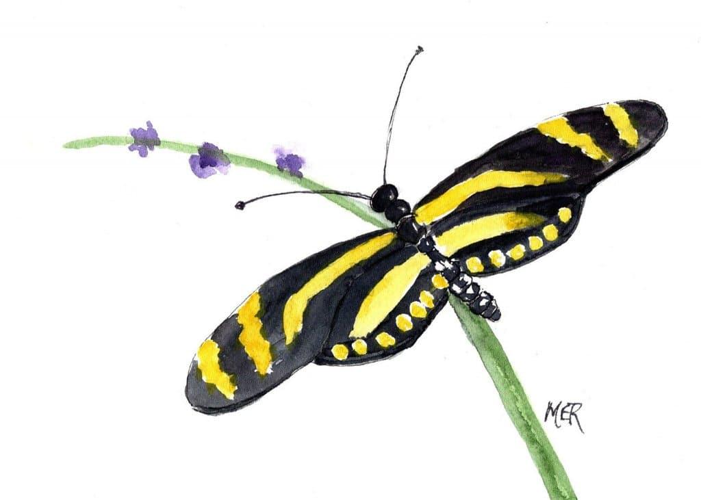 6/3/21 One of my favorite butterflies, – Zebra Longwing. 6.3.21 Butterlfy img001