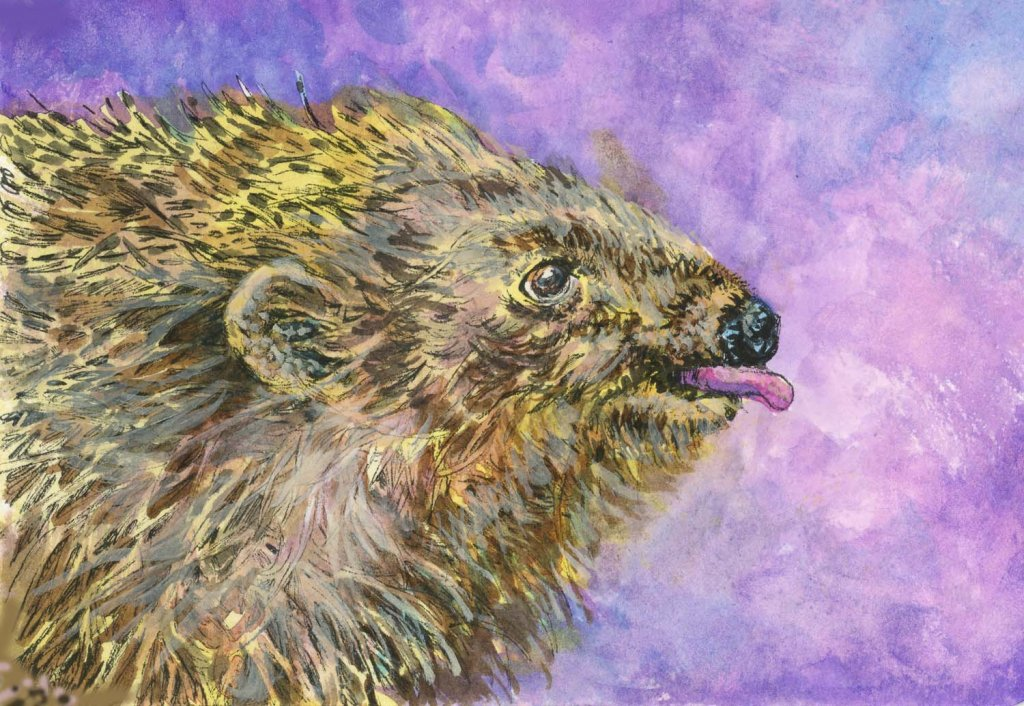 #DoodlewashJune2021 prompt: Hedgehog. Did you know that hedgehogs can walk 1 or 2 miles in their eve