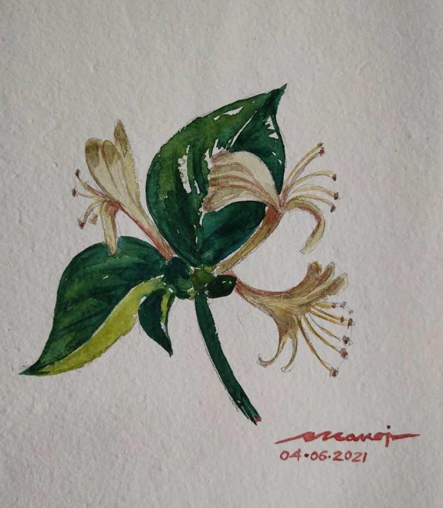 Dt: 04.06.2021 Sub: HONEYSUCKLE Watercolor painting on handmade paper IMG_20210605_181116