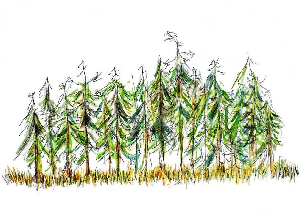 Woodland, Bloedel Reserve, Pen & Ink, Watercolors Woodland, Bloedel Reserve