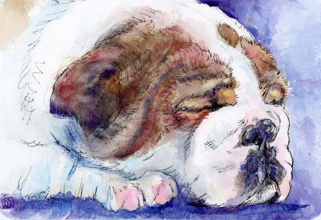 bulldog puppy watercolor-Zebra Technical Pen & ZenArt Alleg ro Watercolor on Hahnemühle Cold Press Postcard