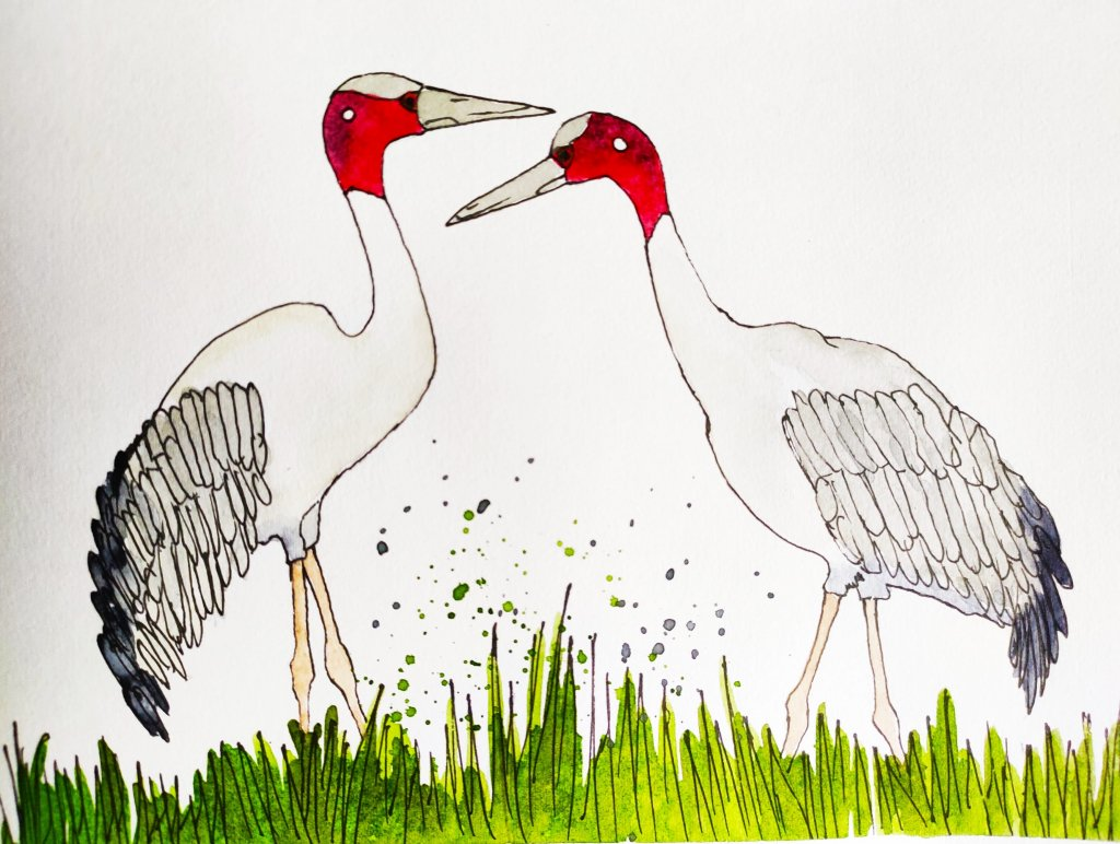 Sarus cranes… Day 14 Prompt: Faithful #doodlewashJuly2021 #WorldWatercolorMonth Faithful_Varsh