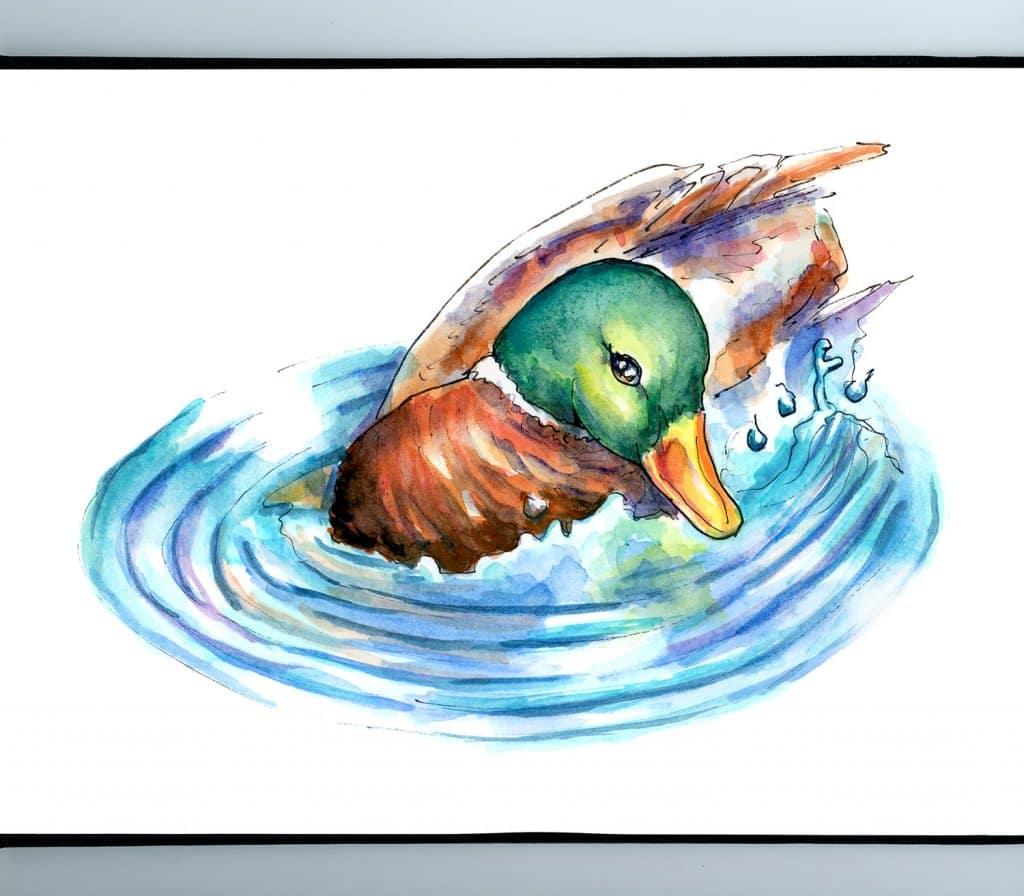 Mallard Duck Swimming Ripple Effect Water Watercolor Illustration Painting Sketchbook Detail