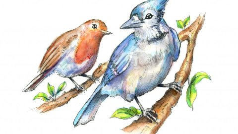 Two Birds Blue Jay English Robin Watercolor Illustration Painting