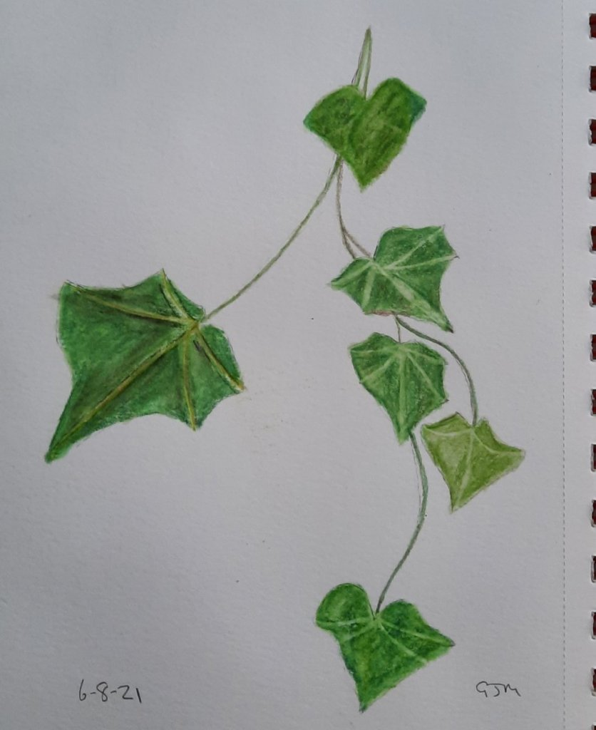 I used my watercolour pencils to do this. #doodlewashaugust2021 Day 7 Ivy #worldwatercolorgroup 2021