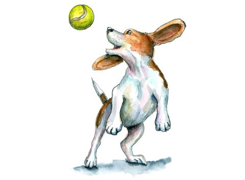 Beagle Catching Tennis Ball Watcerolor Illustration Painting
